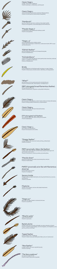 The variety of pan-bird feathers