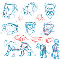 Semi-real lion doodles