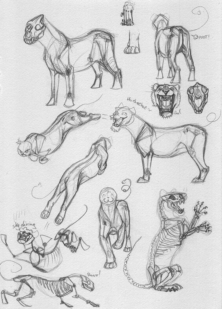 Feline Body Practice by AFrozenHeart