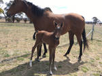 Newborn Foal Stock