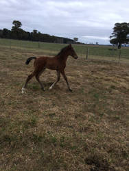 Foal Stock Trotting by Lucid-Dimensions