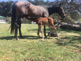 Foal Stock Nursing by Lucid-Dimensions