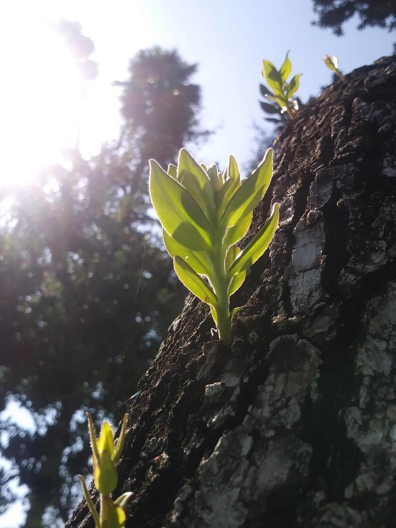Tree Work by UzimakiDraws