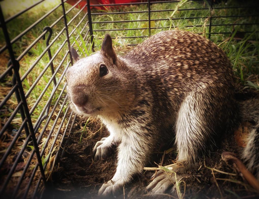 Squirrel photography by UzimakiDraws