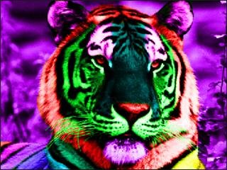 The Power Within ~Open~ Rainbow_tiger_by_popsqwiggle