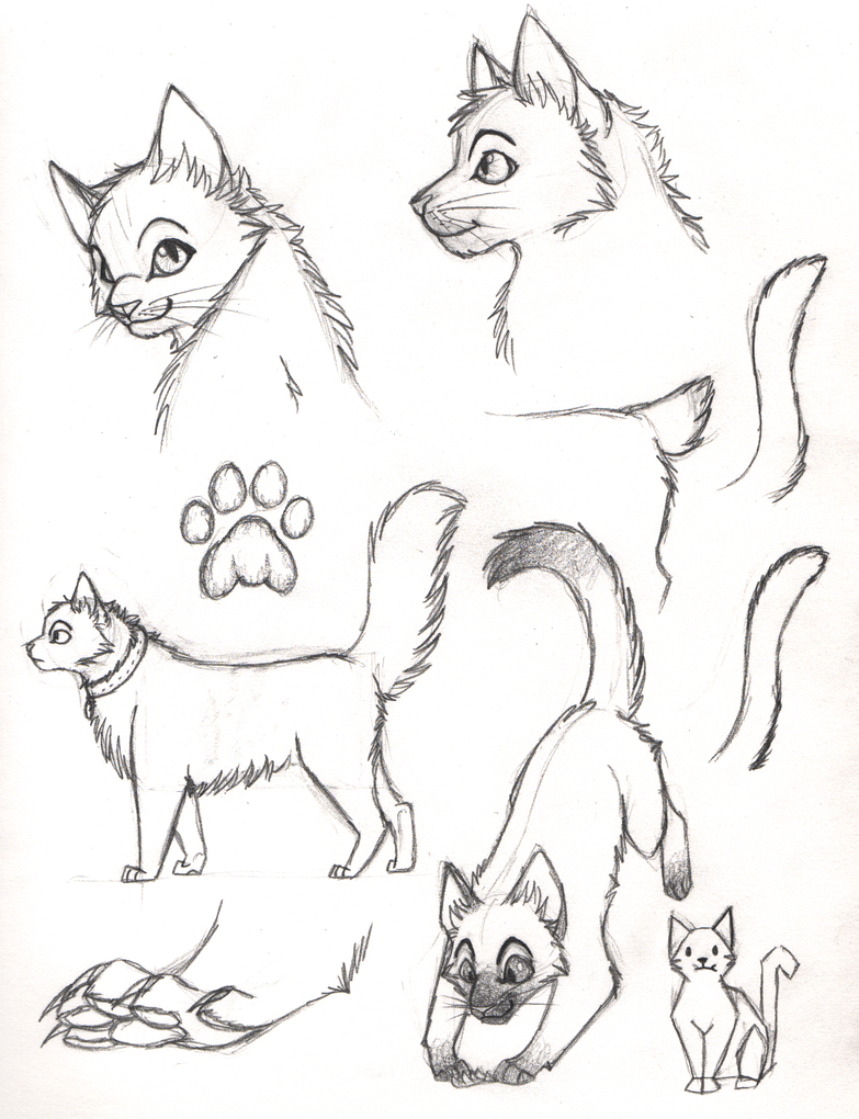 cat sketches by ripple09 on deviantart
