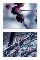 .winter's beads