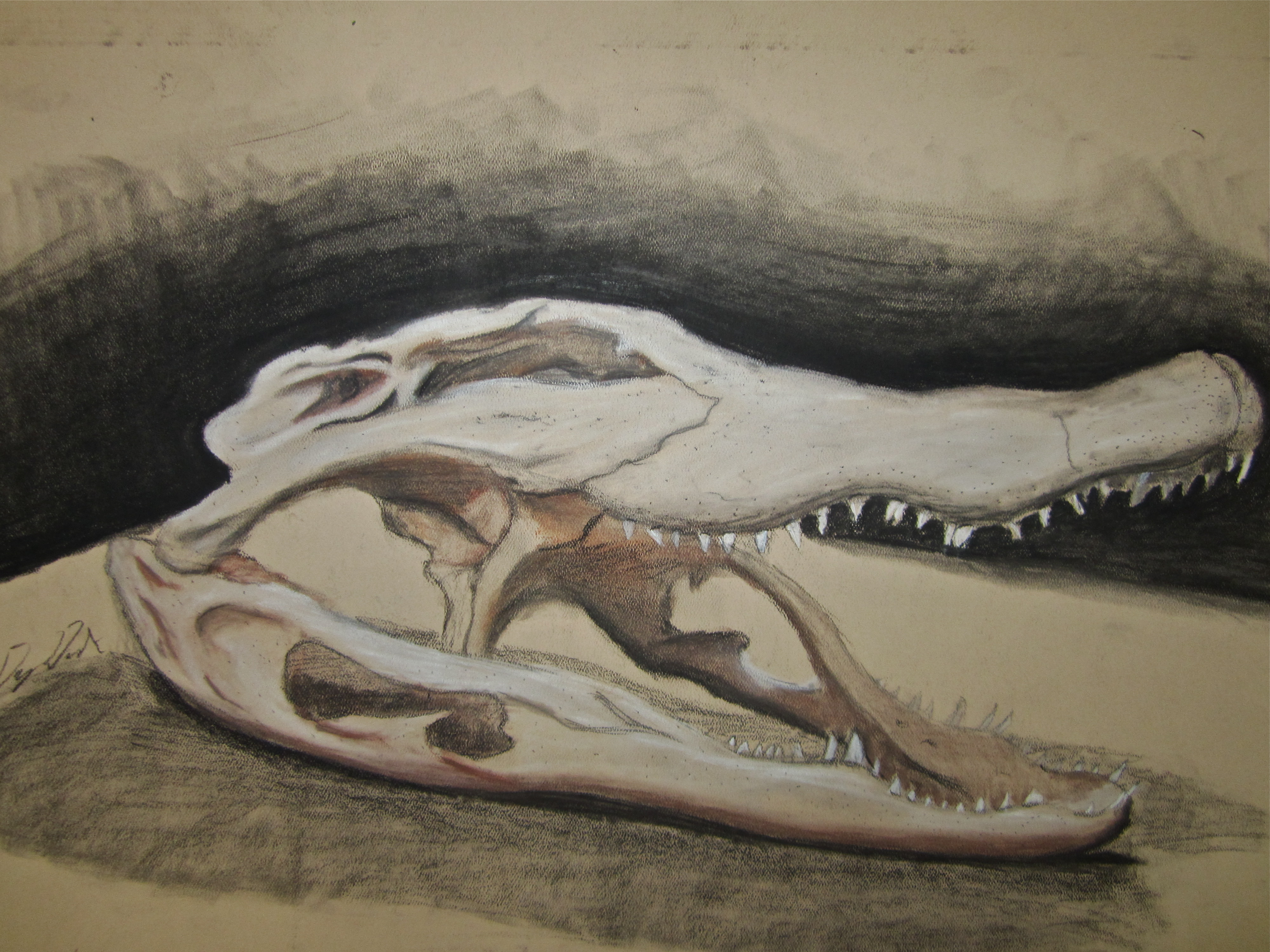 Croc Skull by MrDannyD