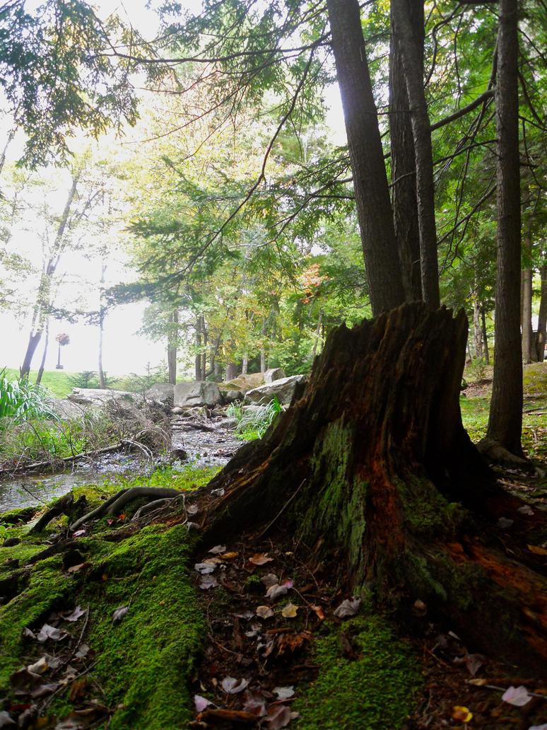 Forest by MrDannyD