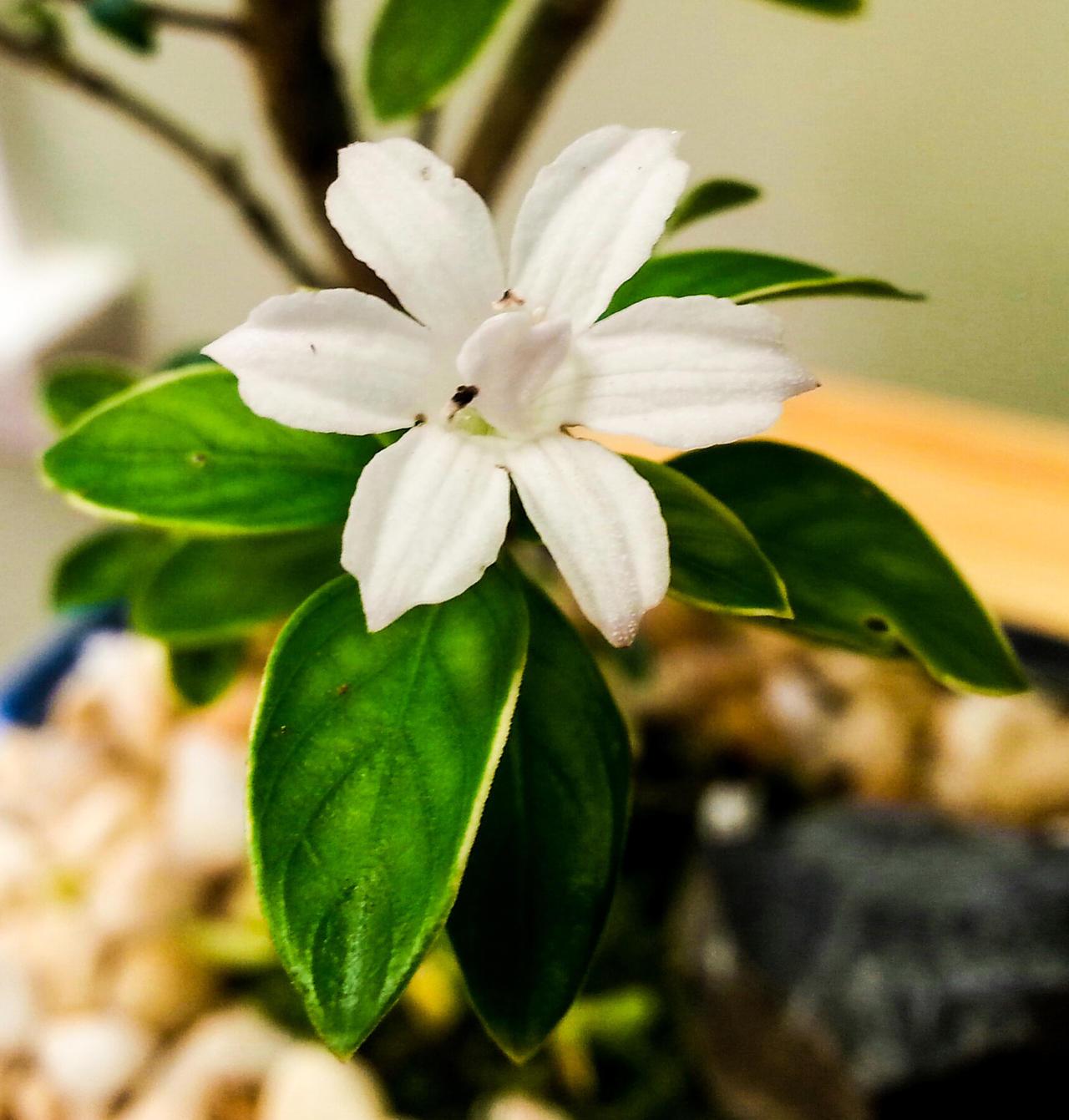 Bonsai Flower 4 by MrDannyD