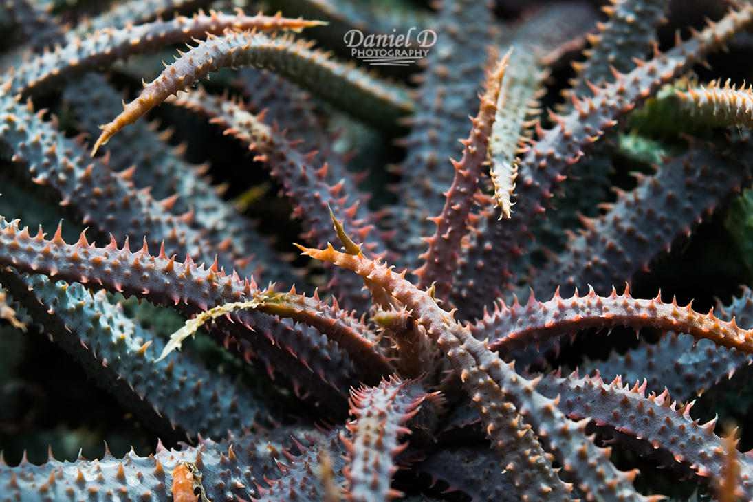 Aloe Abstract by MrDannyD