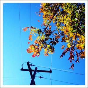 ...Wired autumn...