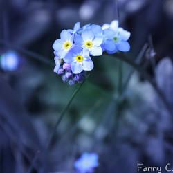 Petites bleues
