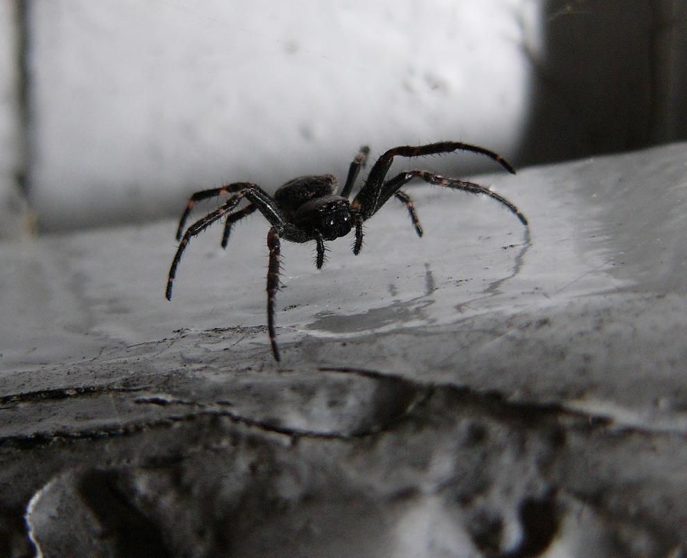 Spider by Kaeros-Stock