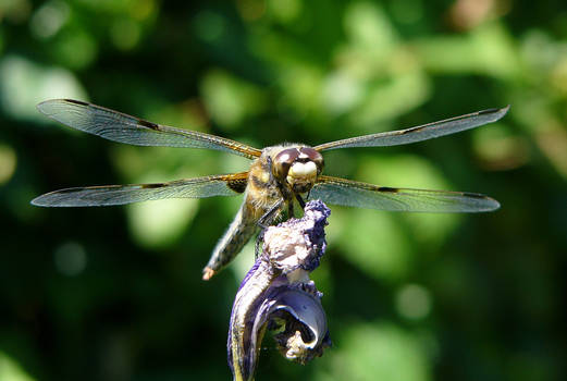 Dragonfly 3rd