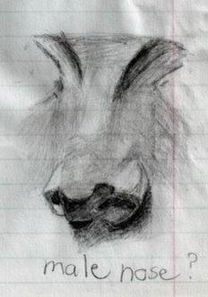 Nose nose.