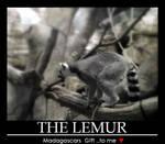 i love lemurs