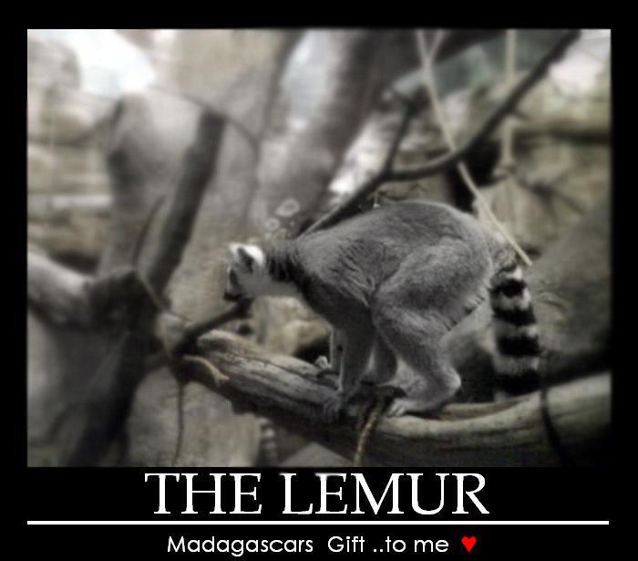 i love lemurs by WhoeMelk13