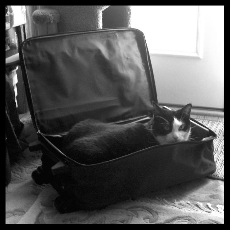 The Traveling Cat--B and W
