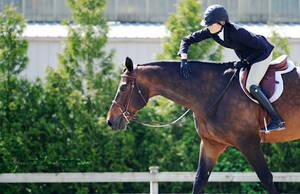 Kudos by equitate