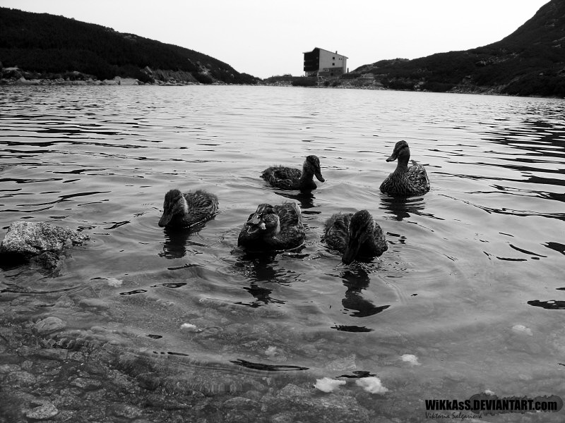 wilD DuckS by WiKkASs