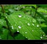 green raindrOps 2