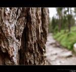 wood High Tatras