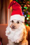 Santa Dolly by scata