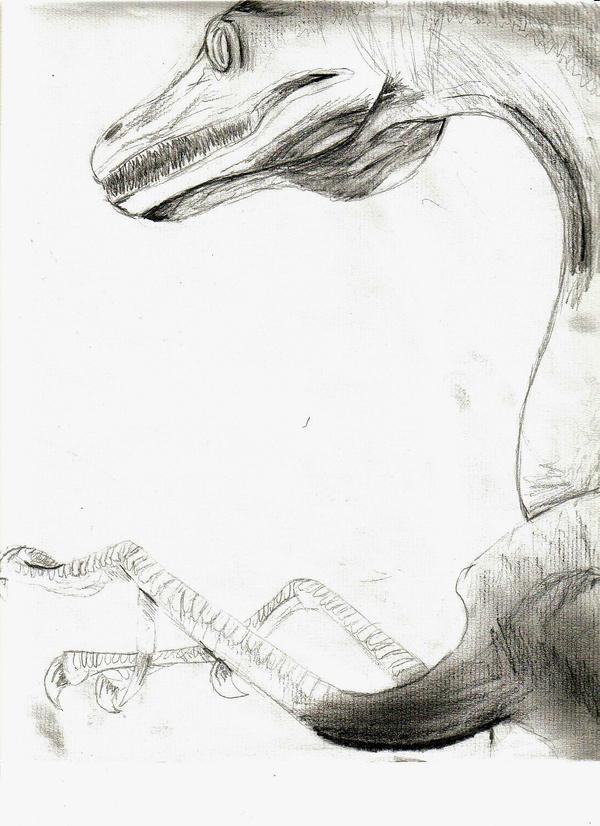 Raptor by Blarghmeister