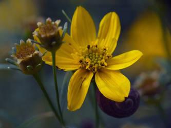 353 by deviantflower
