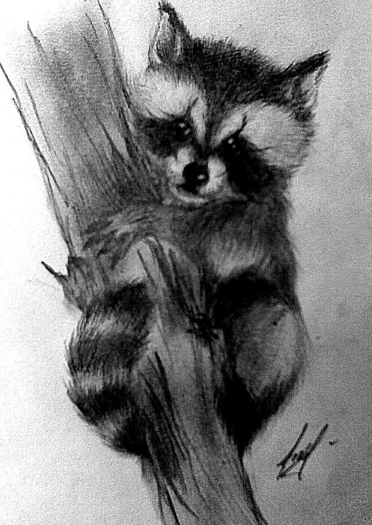 baby raccoon by deikochan on DeviantArt Raccoon Drawing