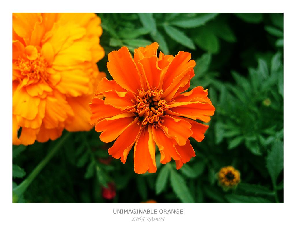 Unimaginable Orange by dwth on DeviantArt
