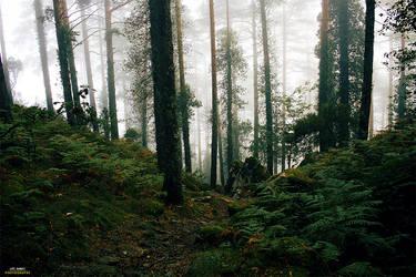 Calming Mist