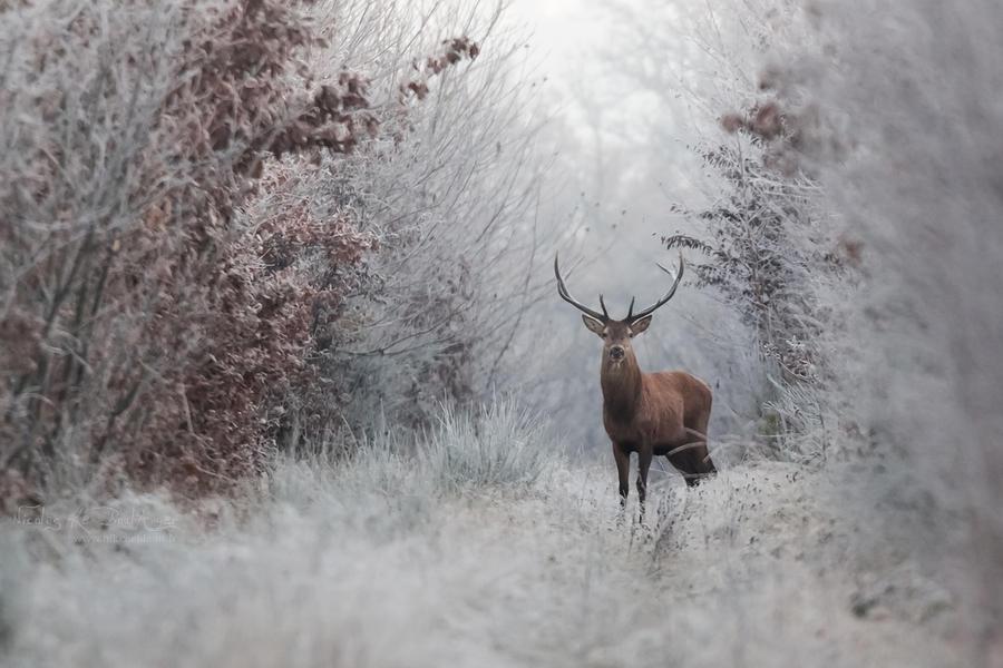 Frozen 3 by Nikanticordechasse