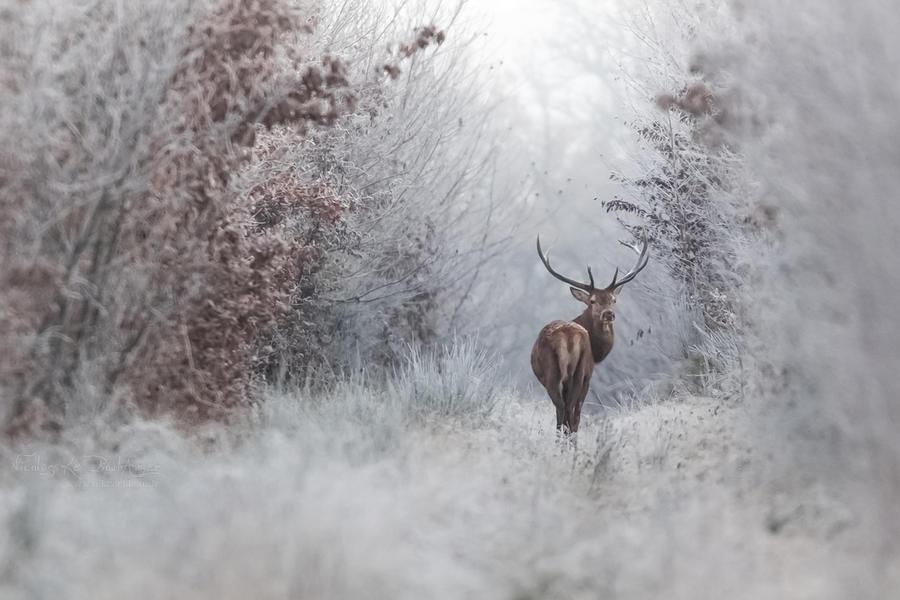 Frozen 5 by Nikanticordechasse