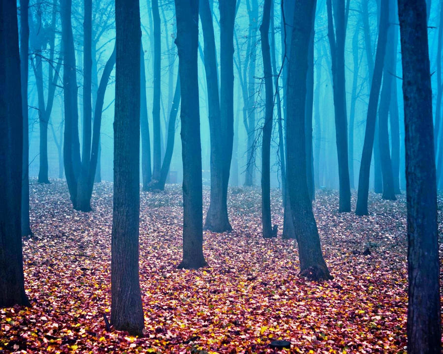 a dream in the forest 'dreams about twin sister trying to tree,a tree bearing fruits,a tree in front of you,rustling leaves of a tree,lush canopy over a tree,clearing trees in a forest.
