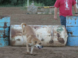 FREE Dog Stock 12 by LightningThieves