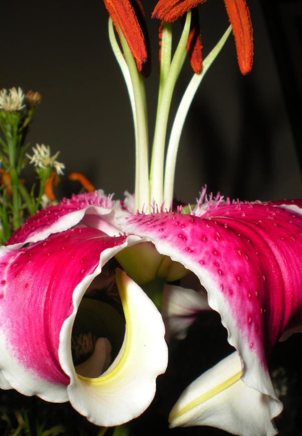 Birthday Flower by IWishIHadWingZ