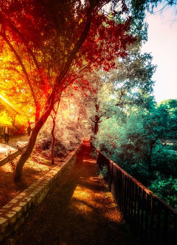 Walk into someone elses dream