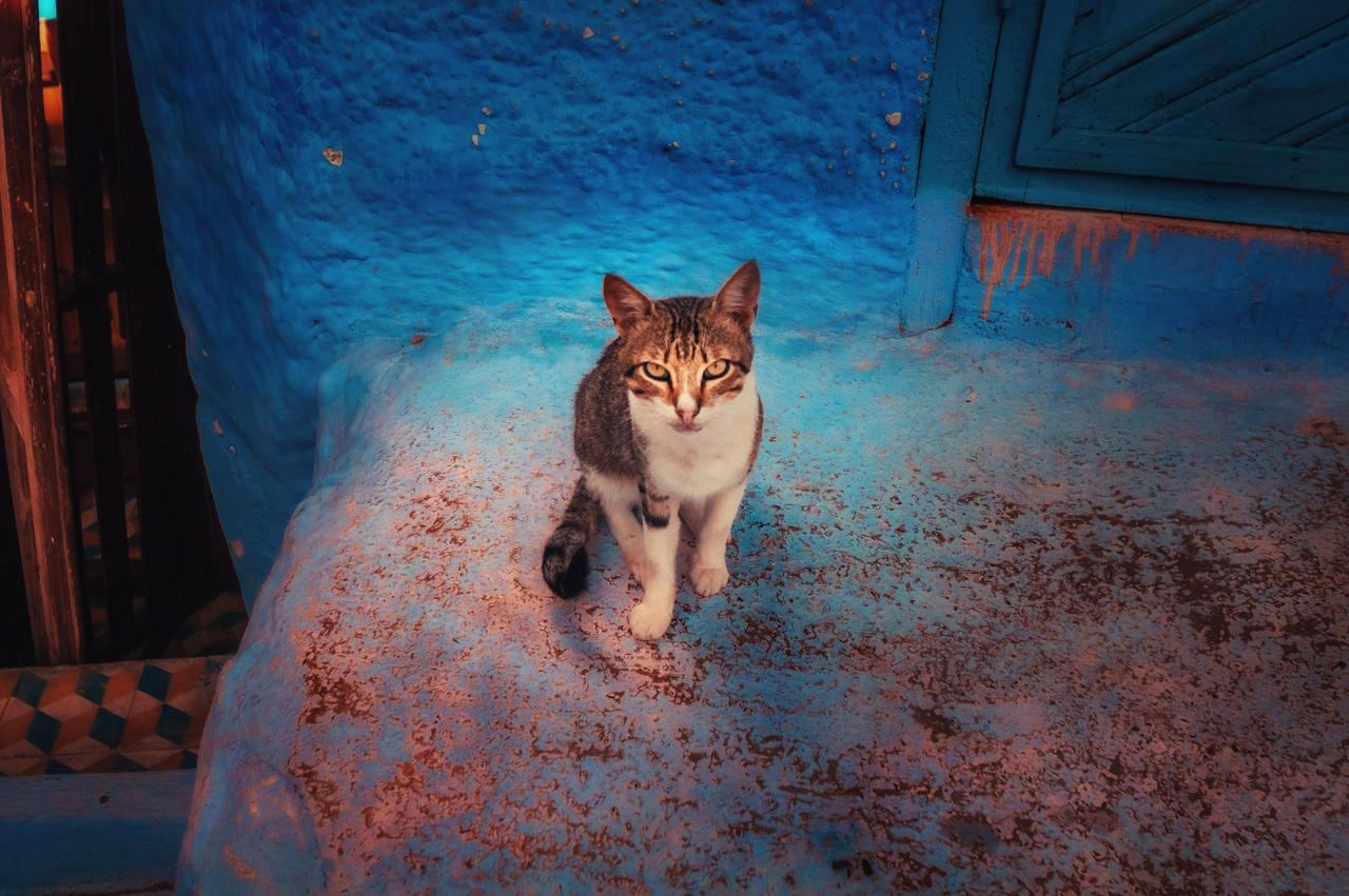 Cats of Morocco by INVIV0