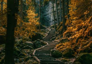 Dark Forests by INVIV0