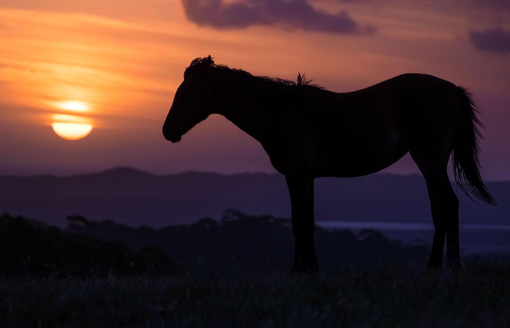 Australian sunset by INVIV0