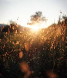 Sunset by INVIV0