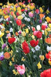 Spring Riot