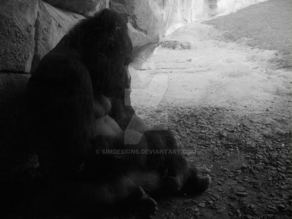Gorillagros by simdesigns