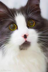 Jarmush the cat