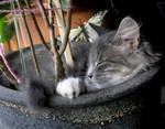 Sleeping Pukki