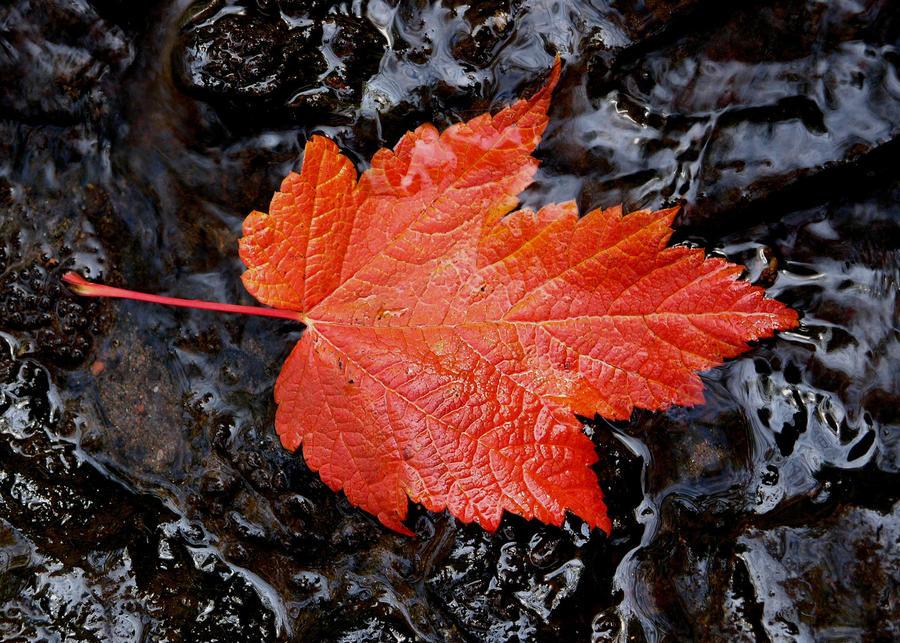 Autumn Leaf Series 4 by RocksRose