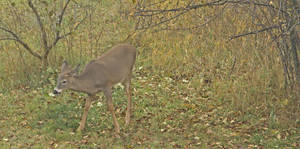 Fall Visitor