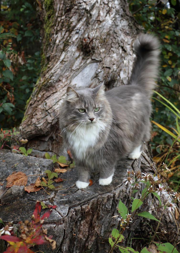Autumn Alert by RocksRose